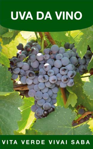 Viti in vaso vita verde vivai web market - Vivai uva da tavola ...
