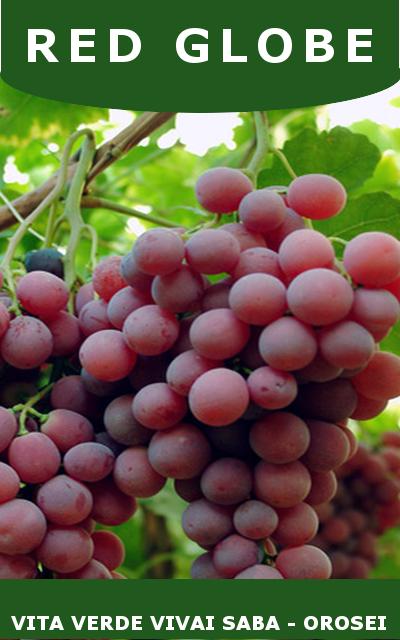 Uva da tavola viti innestate in vaso 10 - Red globe uva da tavola ...