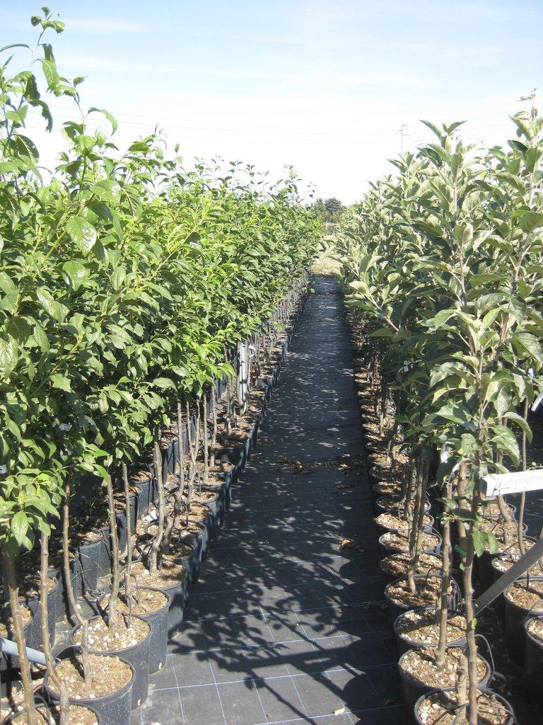 Mix piante da frutto medio 50 piante ebay for Vendita piante da frutto sardegna