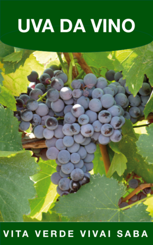 Barbatelle uva da vino vita verde vivai web market for Barbatelle di vite